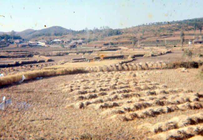 Korea Rice paddies outside of B Battery 1973-1974