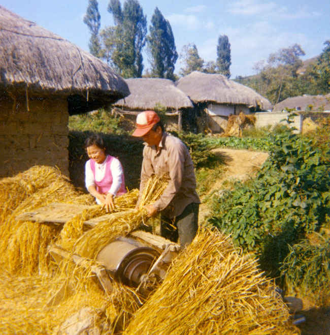 Koreans threshing wheat 1973.