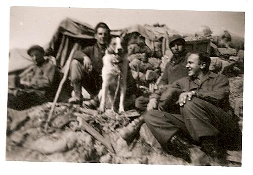 His combat brothers and another adopted dog.